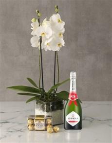plants: Luxurious Phalaenopsis Orchid Gourmet Hamper!