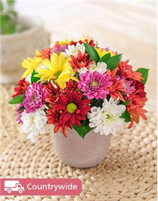 gifts: Mixed Daisies in a Pottery Vase Petite!