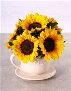 flowers: Sunflowers in a Teacup!