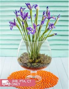 flowers: Irises in a Brandy Vase!