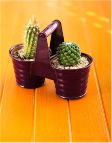 plants: Cacti in a Duo Pot!