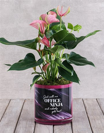 secretarys-day: Pink Anthurium in Office Ninja Vase!