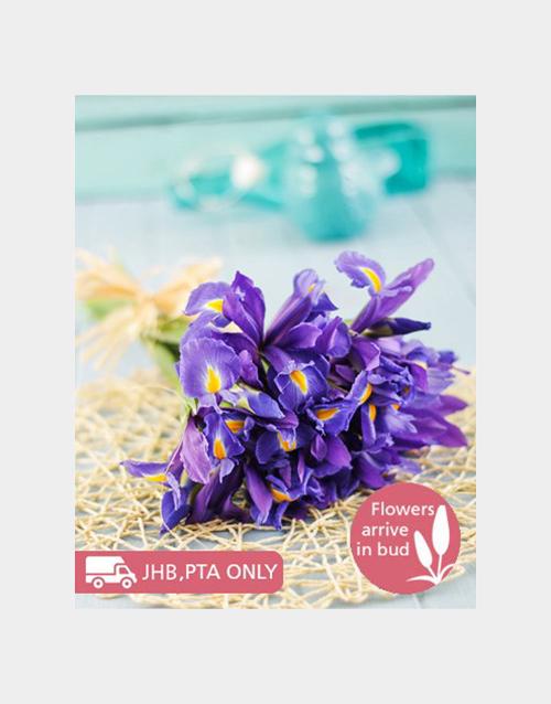 colour: Dark Blue Irises in a Gift Box!