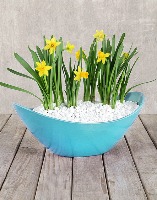 best-sellers: Daffodil in a Boat!