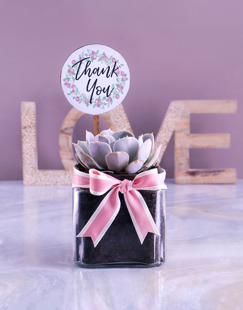mothers-day: Thank You Succulent!