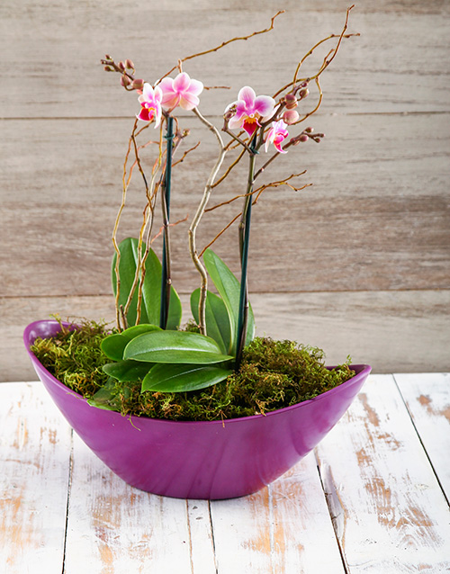 orchids: Orchids in a Boat!
