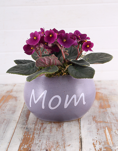 mothers-day: Mom Pot with Violet Plant!