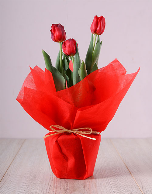 flowers: Red Tulip Pot!