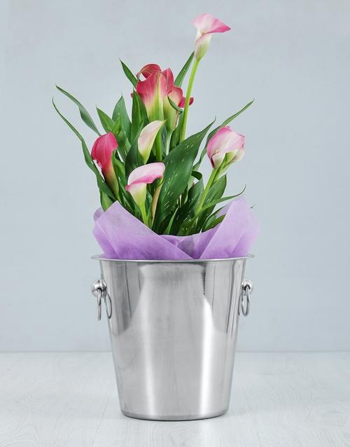 lilies: Pink Zantedeschia Ice Bucket!
