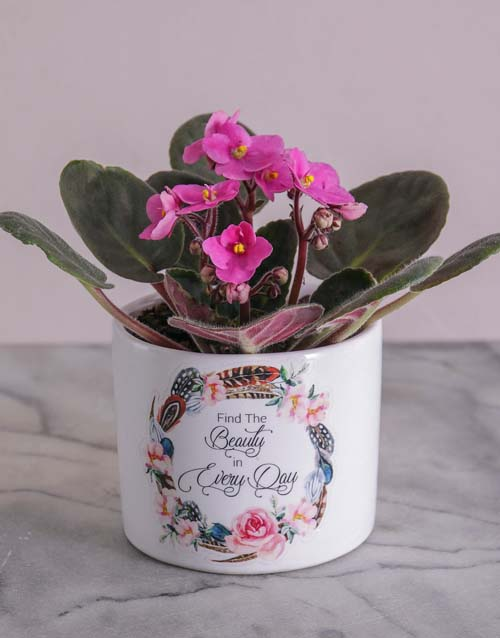 mothers-day: Mothers Day African Violet!