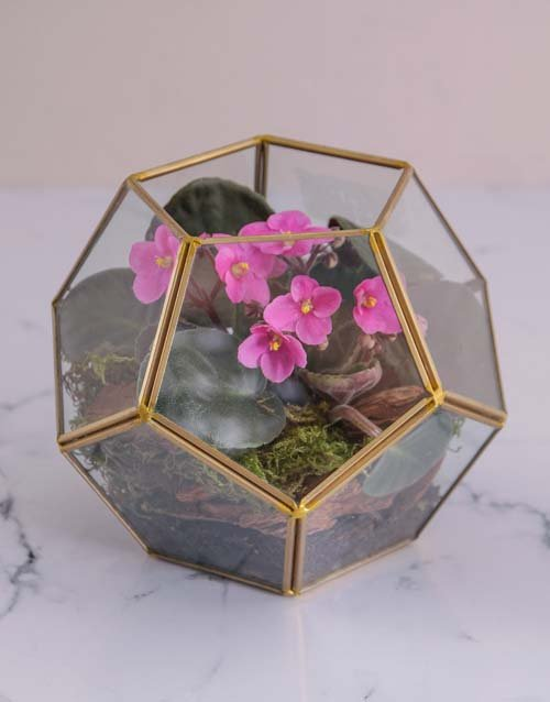 colour: Mothers Day African Violet Terrarium!