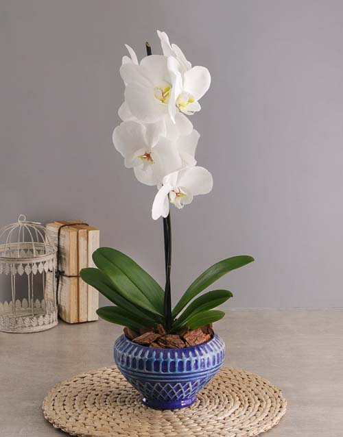 colour: Mothers Day Orchid In Cobalt Bowl!