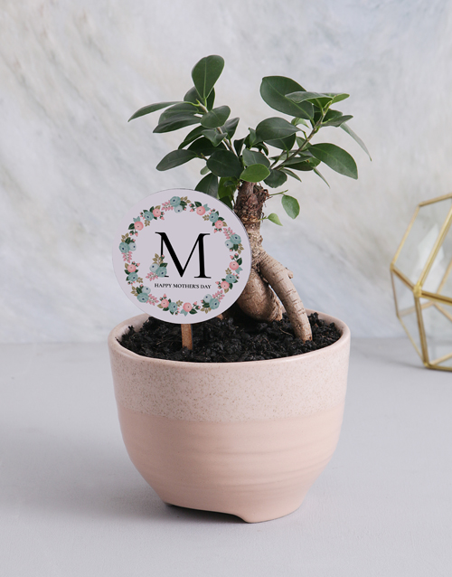 mothers-day: Bonsai Tree For Mothers Day!