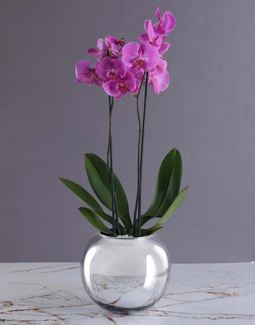 mothers-day: Mothers Day Pink Orchid In Silver Ball!