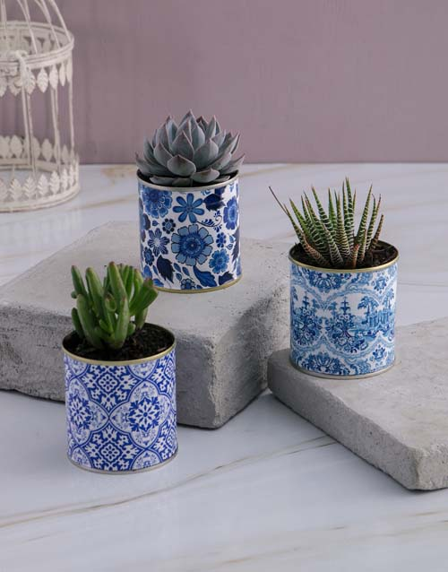 flowers: Mothers Day Succulent Cacti Trio!