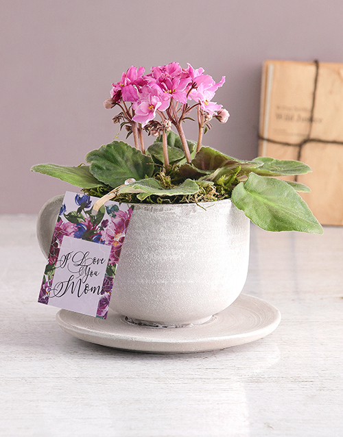 colour: Mothers Day African Violet In A Teacup!