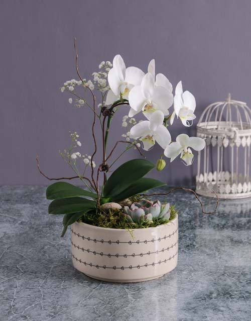 colour: Mothers Day Orchid And Succulent Vase!