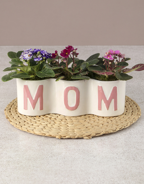 mothers-day: Mothers Day African Violet Surprise!