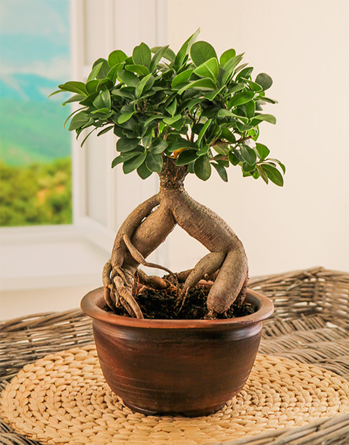 flowers: Bonsai Tree in Pottery Vase!
