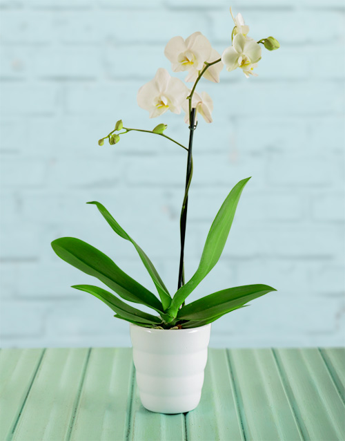colour: Tiny Dancer Orchid Gift!