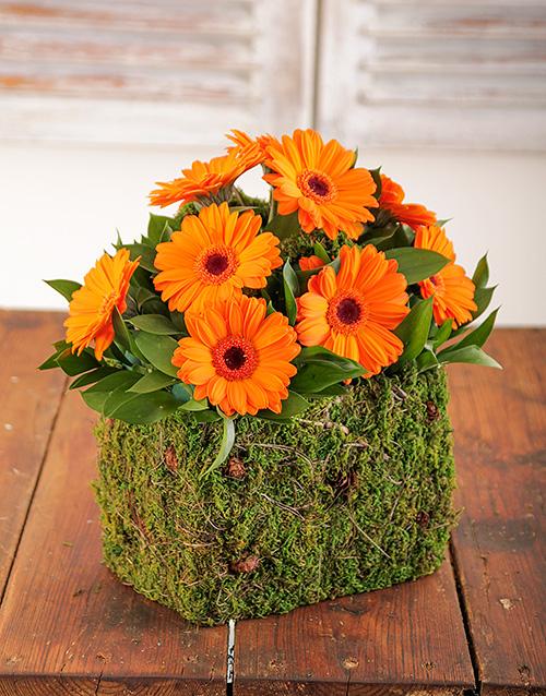 colour: Mini Orange Gerberas in Moss Basket!