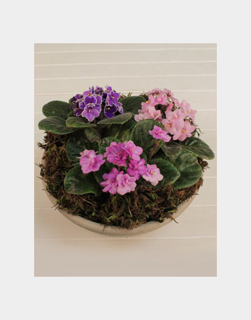 flowers: African Violet Plant!
