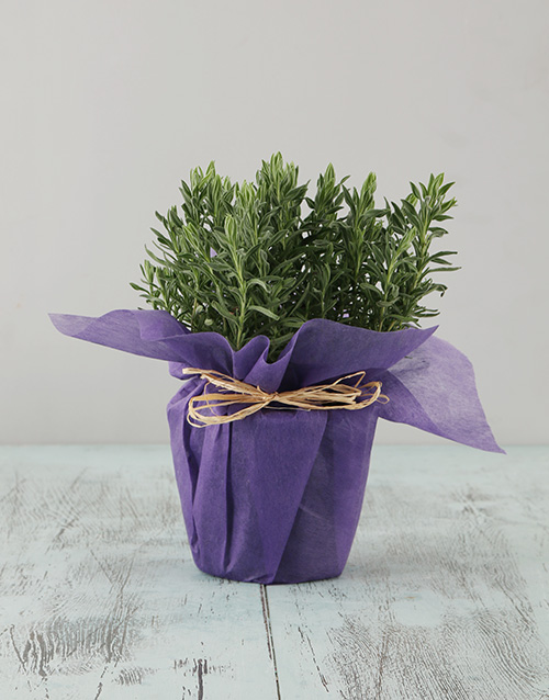 colour: Lavender in Wrapping!
