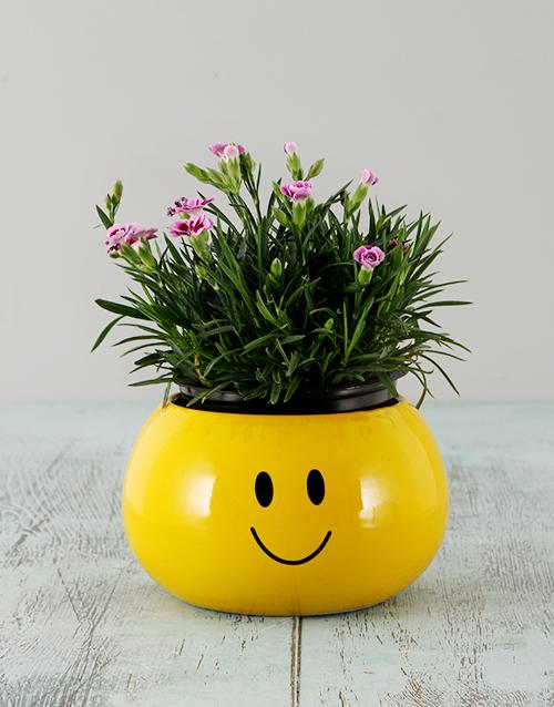 colour: Dianthus in a Smiley Face Pot!
