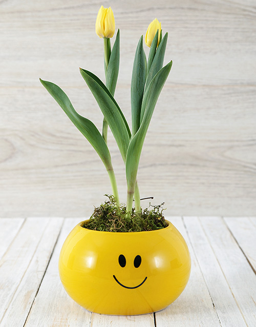pottery: Yellow Tulip Plant in Smiley Pot!