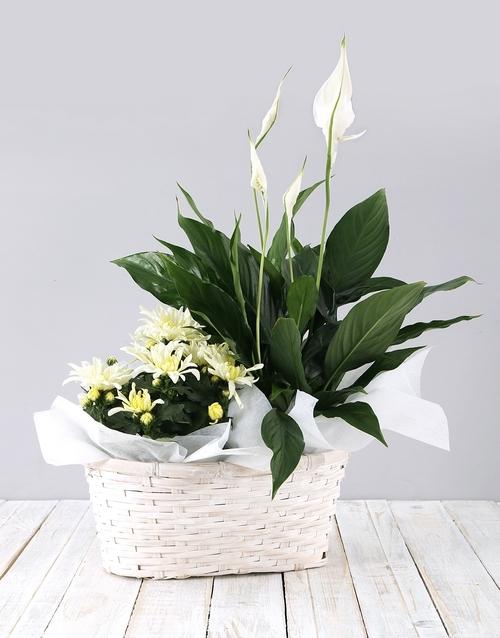 birthday: Mixed Spathiphyllum Basket!