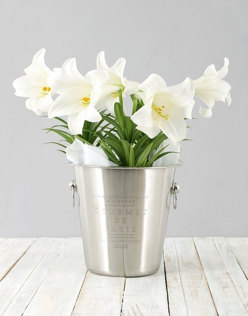colour: St Joseph Lily Plant in Ice Bucket!