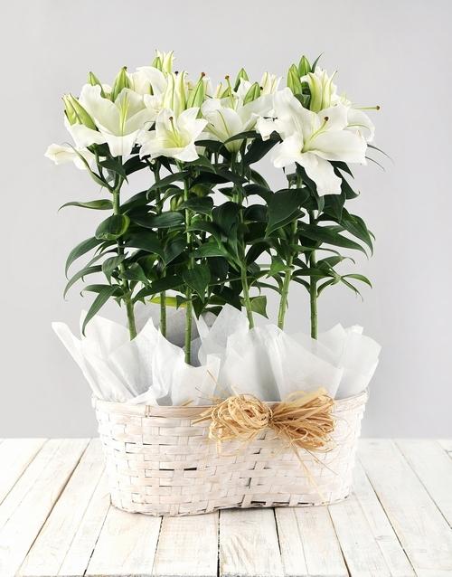 colour: Casablanca Lily Basket!