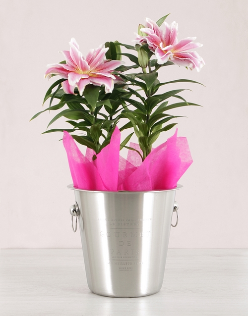 colour: Roselily Plant in Ice Bucket!