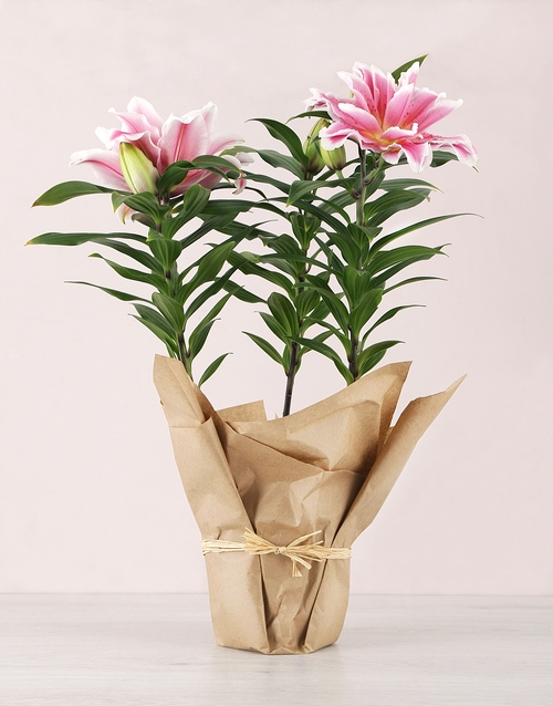 lilies: Rose Lily in craft Paper!