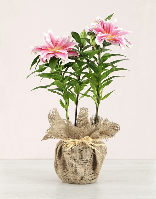colour: Rose Lily in Hessian!
