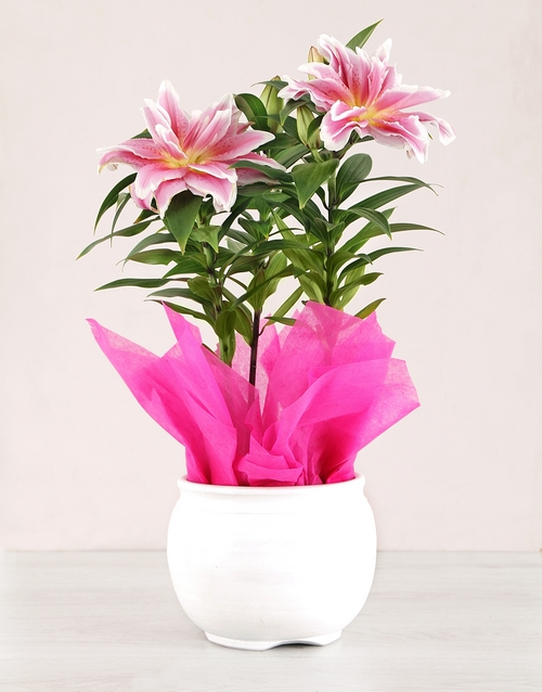 lilies: Roselily Plant in White Pottery!