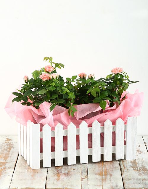basket: Pink Rose Bush in Picket Fence!