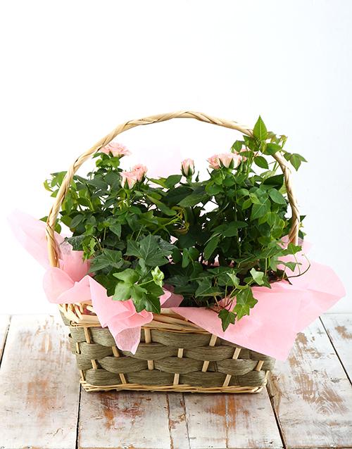 flowers: Pink Rose Bush Basket!