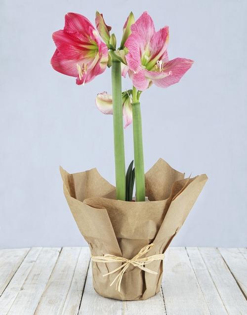 amaryllis: Pink Amaryllis in Craft Paper!