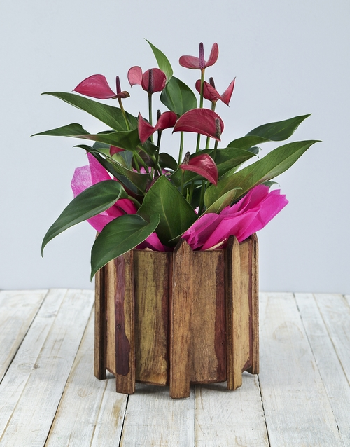 prices: Pink Anthurium in Wooden Spike Vase!