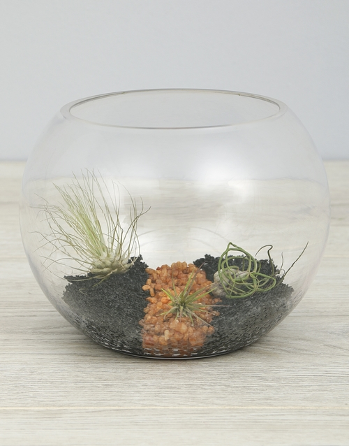 coloured-vases: Air Plant Trio In Black Stone Fish Bowl!