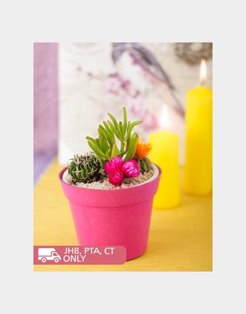 pottery: Cacti Garden!