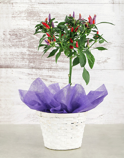 basket: Red Chilli in Woven Basket!
