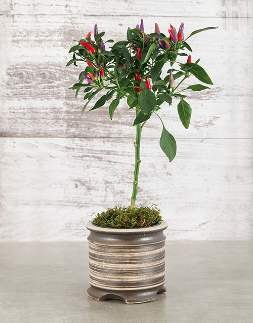 whats-new: Red Chilli in Medium Pot!