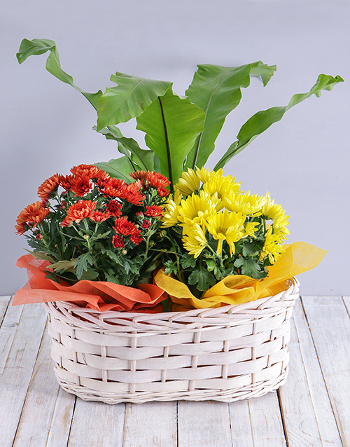 plants: Mix of Flowering Plants in a Basket!