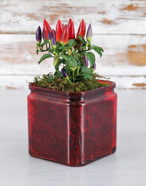 vase: Red Hot Chilli Vase!