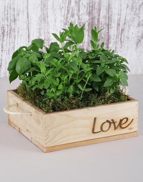 birthday: Herb Garden in Wooden Flower Box!