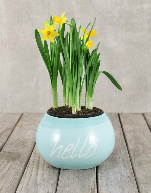 plants: Sunny Daffodil Plant in Hello Pot!