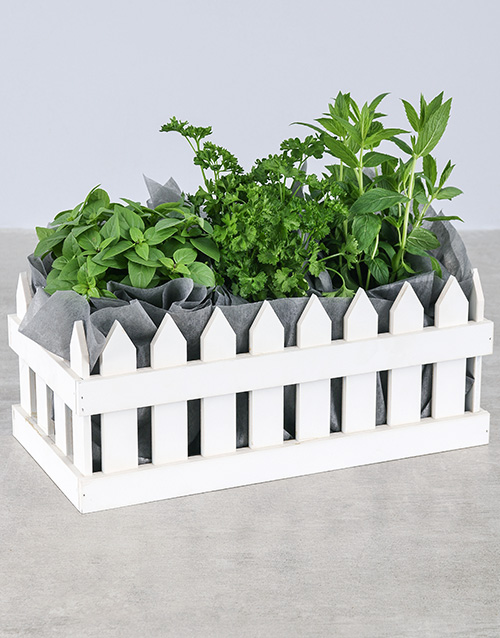 herbs: Picket Fence of Herbs!