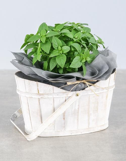 flowers: Basil Herbs in White Basket!